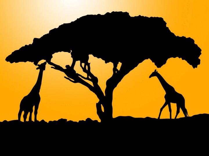 Что такое Африка в понимании Google?
